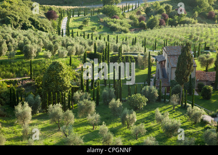 Olive groves and Italian Cyprus trees are seen at sunset in the Medieval Umbrian town of Orvieto. Italy. - Stock Photo