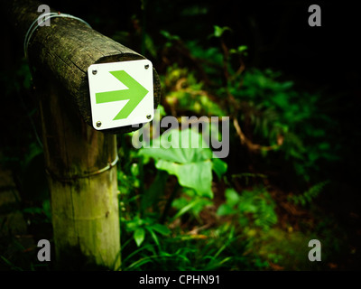 Green arrow in woodland path - Stock Photo