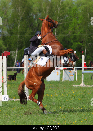 Rearing horse and rider in a jumping field - Stock Photo