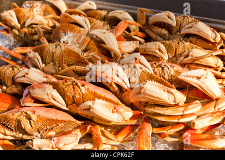 Steamed Dungeness crabs - Stock Photo
