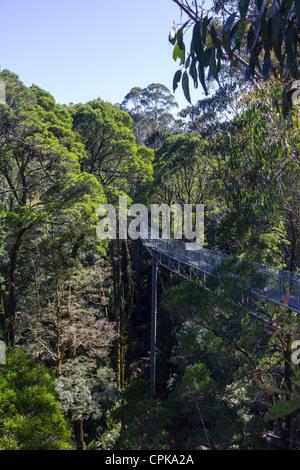 Otway Fly Treetop Walk, Great Otway National Park, Victoria, Australia - Stock Photo