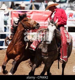 Cowboy On Bucking Horse During The Saddle Bronc Riding