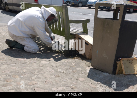 Beekeeper collecting a swarm of wild honey bees in Kirbymoorside Market Place North Yorkshire - Stock Photo