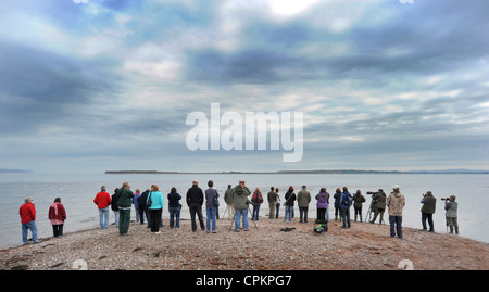 WILDLIFE WATCHERS PHOTOGRAPHERS GATHER TO SEE WILD DOLPHINS  AT CHANONRY POINT NEAR ROSEMARKIE ON THE MORAY FIRTH - Stock Photo