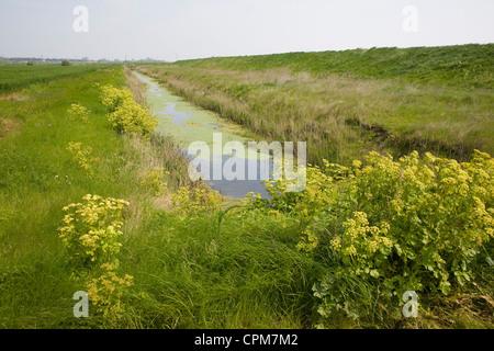 Drainage ditch draining marshes Alderton, Suffolk, England - Stock Photo
