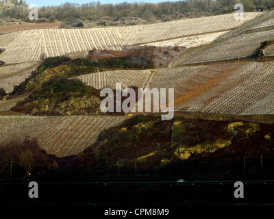 Vineyards at Osterspai, Rhine River, Germany - Stock Photo