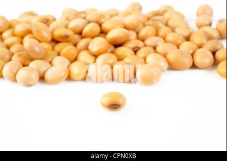 pile soybeans on white background - Stock Photo