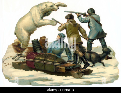 hunt, bearhunting, polar bear attacking people, Germany, circa 1895, Additional-Rights-Clearences-NA - Stock Photo