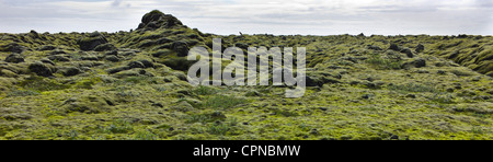 Panoramic view of moss-covered lava field, Iceland - Stock Photo