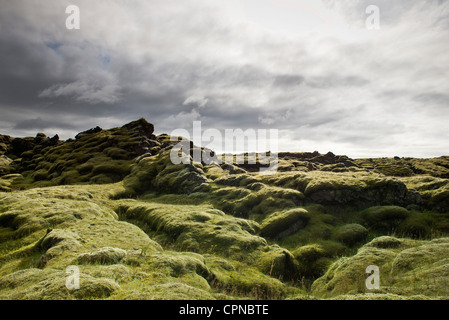 Moss-covered lava field, Iceland - Stock Photo