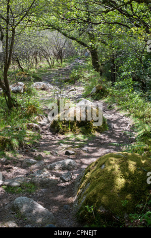 Oak and beech trees along the pathway next to the River Dart. Devon, England - Stock Photo
