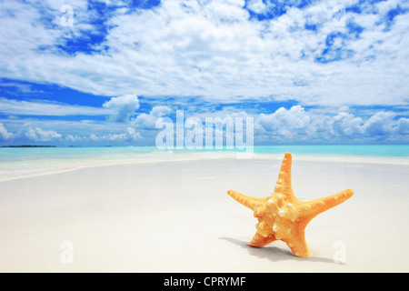 A view of a starfish on a beach, cloudy sky and turquoise sea at Kuredu island, Maldives, Lhaviyani atoll - Stock Photo