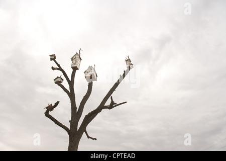 Birdhouses on tree against overcast sky - Stock Photo