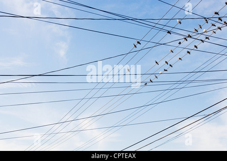Birds sitting on power cable - Stock Photo