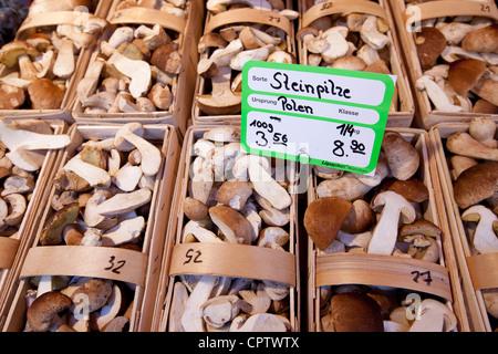 Mushrooms on sale at Viktualienmarkt food market in Munich, Bavaria, Germany - Stock Photo
