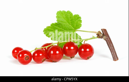 Redcurrant on the withe background - Stock Photo