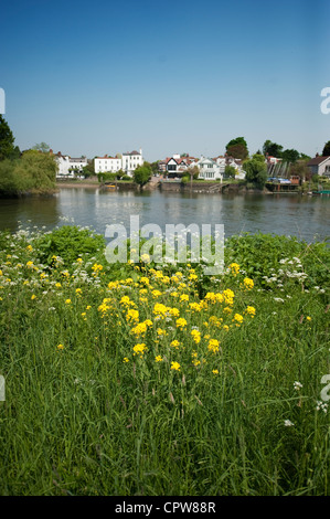 The river Thames and Eel Pie Island from the Ham bank on the Thames Cycle Path in south west London looking towards - Stock Photo