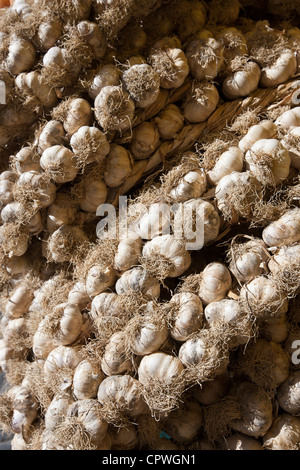 Garlic plaits, Allium sativum, on sale in food market in Pienza, Tuscany, Italy - Stock Photo