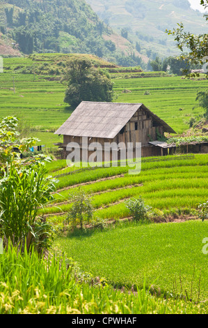 House on Rice Field - Stock Photo