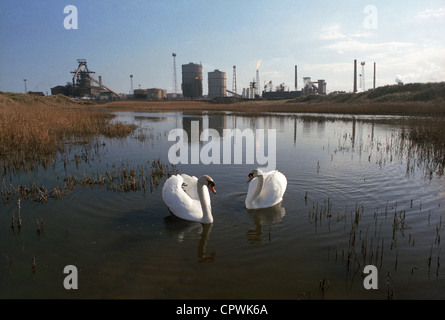Two swans & the former British Steel works at Redcar, now operated by Sahaviriya Steel Industries (SSI). - Stock Photo