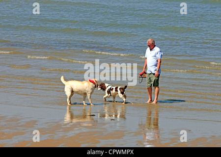 Tow dogs having fun on the beach with their owner - Stock Photo