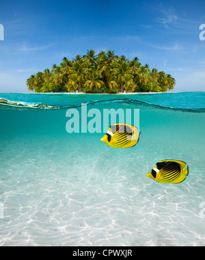 Half underwater shot of butterfly-fish on sand sea floor and palm island - Stock Photo