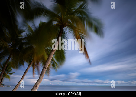 palm trees swaying in the wind, San Juan Beach, Siquijor, The Visayas, Philippines - Stock Photo