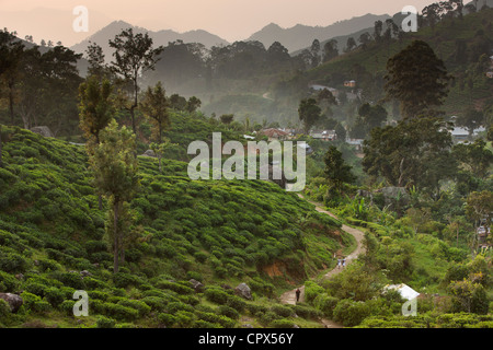 village of Namunukalu surrounded by a tea plantation, nr Ella, Southern Highlands, Sri Lanka - Stock Photo