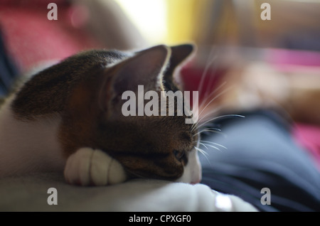 Cute kitten resting on owners body - Stock Photo