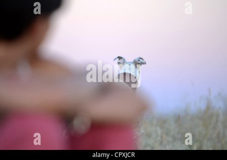 Young woman with her dog in nature, at sunset - Stock Photo