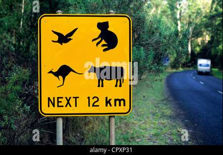 Australia, Victoria, Great Otway National Park, sign road warning about animals passage - Stock Photo