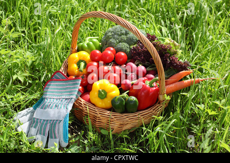 Basket full of organic vegetables with glove on green grass. - Stock Photo