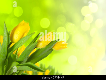 Spring tulips on blur background - Stock Photo