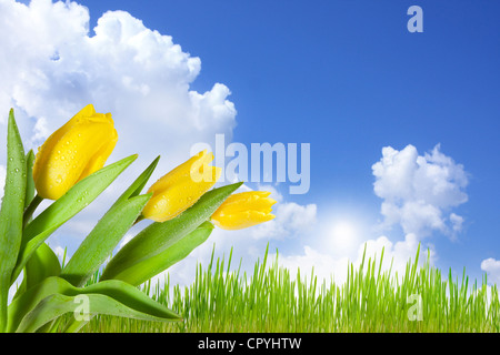 Landscape on the green meadow with blue sky abstract concept with tulips - Stock Photo