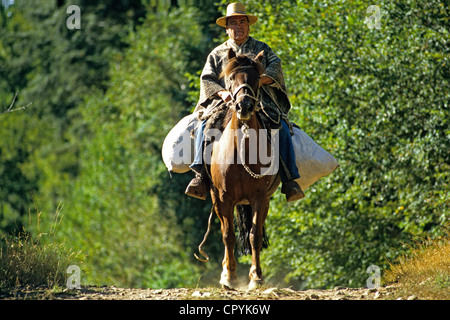 Chile Araucania Region Quinquen valley in summer nut of Araucaria tree is brought back on horseback and sold at - Stock Photo
