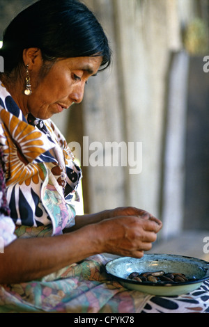 Chile Araucania Region Quinquen valley Pehuenche woman preparing nut which has previously been dried up for preparation - Stock Photo