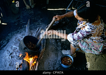 Chile, Araucania Region, Quinquen valley, Pehuenche woman in the process of drying the nut for the preparation of - Stock Photo