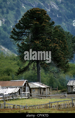 Chile, Araucania Region, Quinquen valley, at the bottom of the Andes mountain range the traditional houses of Pehuenche - Stock Photo