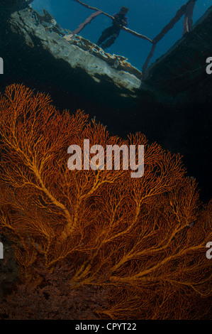 Surface reflections and Gorgonia fan corals in the Lembeh Straits of Indonesia - Stock Photo