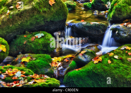 Small creek in a forest with a waterfall, Bavarian Forest National Park, Bavaria, Germany, Europe - Stock Photo
