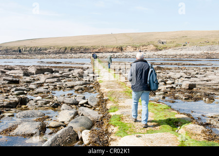 The brough of Birsay on the Orkneys and causeway at low tide - Stock Photo