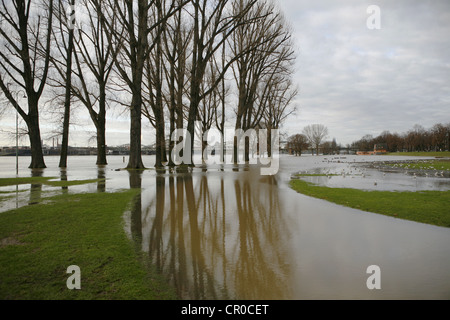 Flood, January 2011, Poller meadows, Koeln-Poll, Cologne, North Rhine-Westphalia, Germany, Europe - Stock Photo