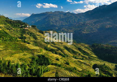 Green rice terraces, rice paddies in Sapa or Sa Pa, Lao Cai province, northern Vietnam, Vietnam, Southeast Asia, - Stock Photo