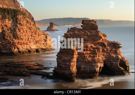 Sandstone stacks near Ladram Bay on the East Devon coastline, UK. - Stock Photo