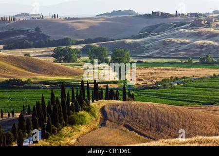 Typical Tuscan landscape near Taverne d'Arbia, Tuscany, Italy, Europe - Stock Photo