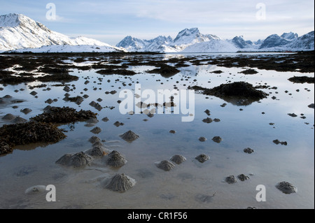 Sand piles made by Lugworms or Sandworms (Arenicola marina) on the Lofoten Islands, Nordland, Norway, Europe - Stock Photo