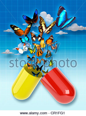 Butterflies emerging from capsule - Stock Photo
