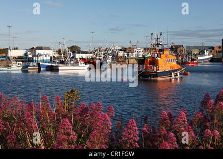 Fishing port of Howth, near Dublin, County Fingal, Leinster, Ireland, Europe, PublicGround - Stock Photo