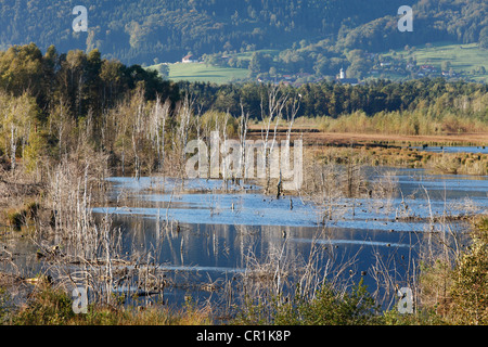 Nicklheimer Moor, peat bogs between Raubling and Bad Feilnbach, Litzldorf at back, Upper Bavaria, Bavaria, PublicGround - Stock Photo