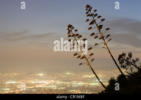 Greece, Attica, Athens, view over the city from Mount Lycabettus, agave americana in the foreground - Stock Photo